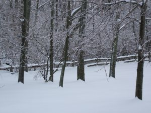 winter09 008