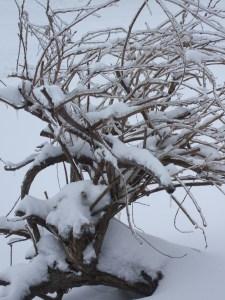 winter09 002