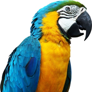 parrot-05